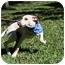 Photo 3 - Labrador Retriever/Terrier (Unknown Type, Medium) Mix Puppy for adoption in braxton, Mississippi - Madonna