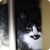 Adopt A Pet :: Abigail & Patsy **NO FEE** - Lafayette, CA
