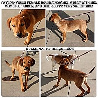Adopt A Pet :: Taylor - Evansville, IN