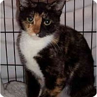 Adopt A Pet :: MIracle - Fort Lauderdale, FL
