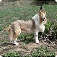 Adopt A Pet :: Gucci - Trabuco Canyon, CA