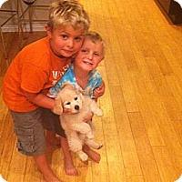 Adopt A Pet :: Cotton - Denver, CO