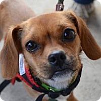 Adopt A Pet :: Sandra - Rockaway, NJ