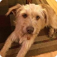 Adopt A Pet :: R.I. SHEBA - W. Warwick, RI