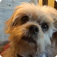 Adopt A Pet :: Jerry - Los Angeles, CA