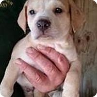 Adopt A Pet :: Beans - Gainesville, FL