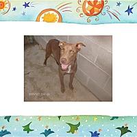 Adopt A Pet :: PIXIE - KELLYVILLE, OK