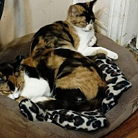 Adopt A Pet :: Sabrina and Samantha - Texarkana, AR