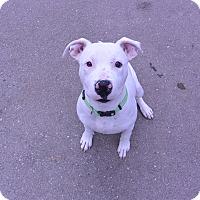 Adopt A Pet :: Petey - Meridian, ID