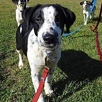 Adopt A Pet :: Benji - St. Francisville, LA