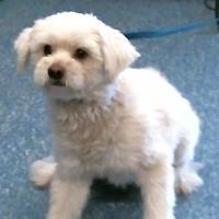 Adopt A Pet :: 155688 - Bakersfield, CA