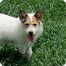 Adopt A Pet :: TASHA