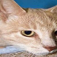 Adopt A Pet :: NESTOR - Ames, IA