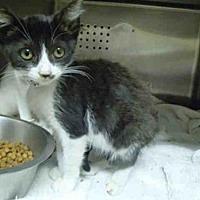 Adopt A Pet :: OREO - Rancho Cucamonga, CA