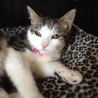 Adopt A Pet :: Verona - Fort Collins, CO