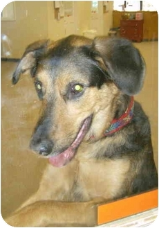 Shepherd (Unknown Type) Mix Dog for adoption in Chester, Maryland - Ronnie