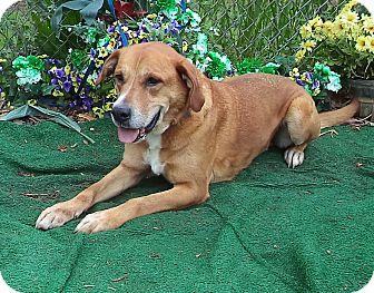 Hound (Unknown Type) Mix Dog for adoption in Marietta, Georgia - RUSTY (R)