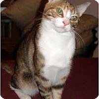 Adopt A Pet :: Frankie - Cranford, NJ