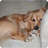 Adopt A Pet :: Buddy - Westfield, IN