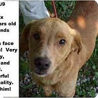 Adopt A Pet :: # 480-09 - Animal Shelter - Zanesville, OH