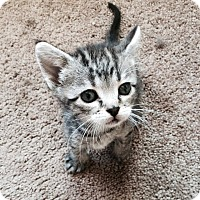 Adopt A Pet :: Zara - Edmonton, AB