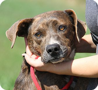 Hound (Unknown Type) Mix Dog for adoption in Marietta, Ohio - Maria (Spayed)