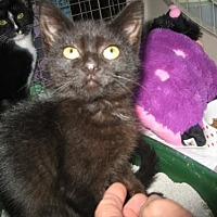 Adopt A Pet :: Sprout* - Trexlertown, PA