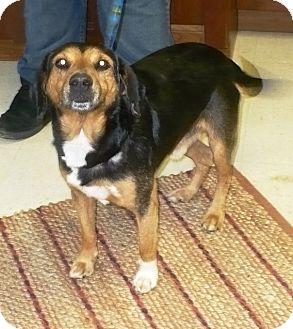 Beagle Mix Dog for adoption in Eastpoint, Florida - Jethro