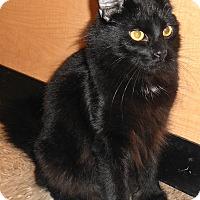 Adopt A Pet :: Homer - Chattanooga, TN