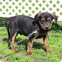 Adopt A Pet :: DUGIE - Bedminster, NJ