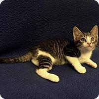 Adopt A Pet :: Spot - Templeton, MA