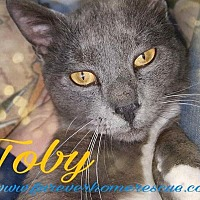 Adopt A Pet :: Toby - Blaine, MN
