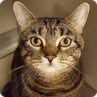 Adopt A Pet :: Bob - Grayslake, IL