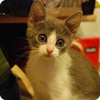 Adopt A Pet :: Diana - Morgan Hill, CA