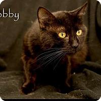 Adopt A Pet :: Bob - Mount Pleasant, SC