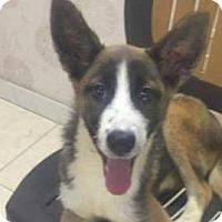 Adopt A Pet :: Maria - San Ramon, CA