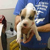 Adopt A Pet :: A574841 - Oroville, CA