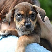 Adopt A Pet :: Smurfette - Acworth, GA