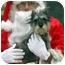 Photo 1 - Schnauzer (Miniature) Mix Dog for adoption in Overland Park, Kansas - Cissy