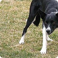 Adopt A Pet :: Tessa - Denver, CO