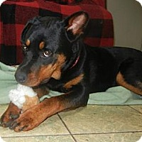 Adopt A Pet :: Jasmine ADOPTED!! - Antioch, IL