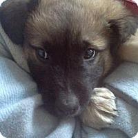 Adopt A Pet :: Mario - Milford, CT
