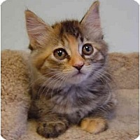 Adopt A Pet :: Cupcake - Modesto, CA