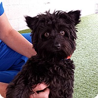 Adopt A Pet :: Waldo - Mission Viejo, CA