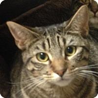 Adopt A Pet :: Sulie - Winchester, CA