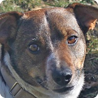 Adopt A Pet :: Bosley - North Olmsted, OH