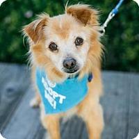 Adopt A Pet :: BB King - Pacific Grove, CA
