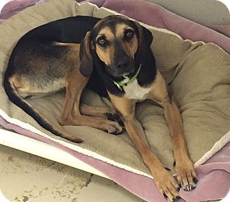 Hound (Unknown Type) Mix Dog for adoption in Jupiter, Florida - Sally