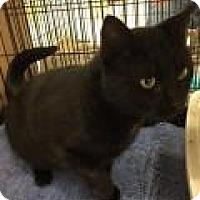 Adopt A Pet :: Frederick - Bear, DE