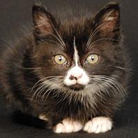 Adopt A Pet :: Vera - Newland, NC